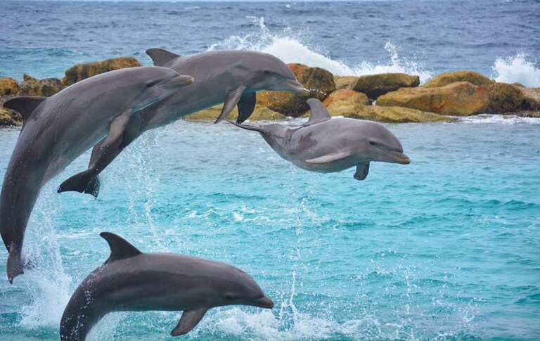 Swimming With Dolphins In Puerto Rico